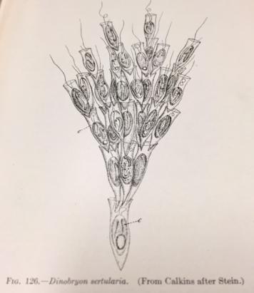 fullsizerender-03