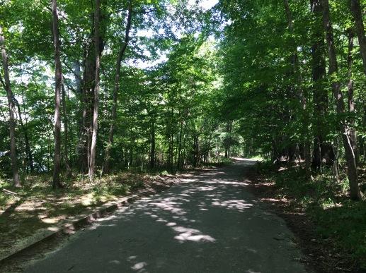 Eagle Creek trees