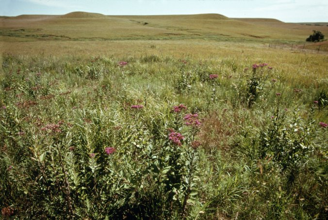 Kansas prairie.jpg
