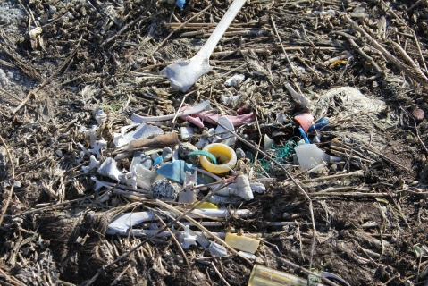 Albatross_carcass_and_marine_debris