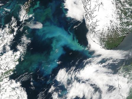 Phytoplankton_Bloom_in_the_North_Sea